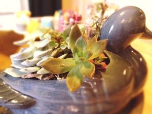 Succulent duck