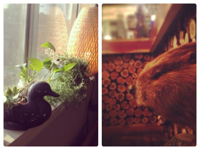 6:30pm - windowsill plants growing strong --- 8:30pm - stuffed beaver at the Buzz Mill