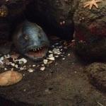 Natural History Museum fish